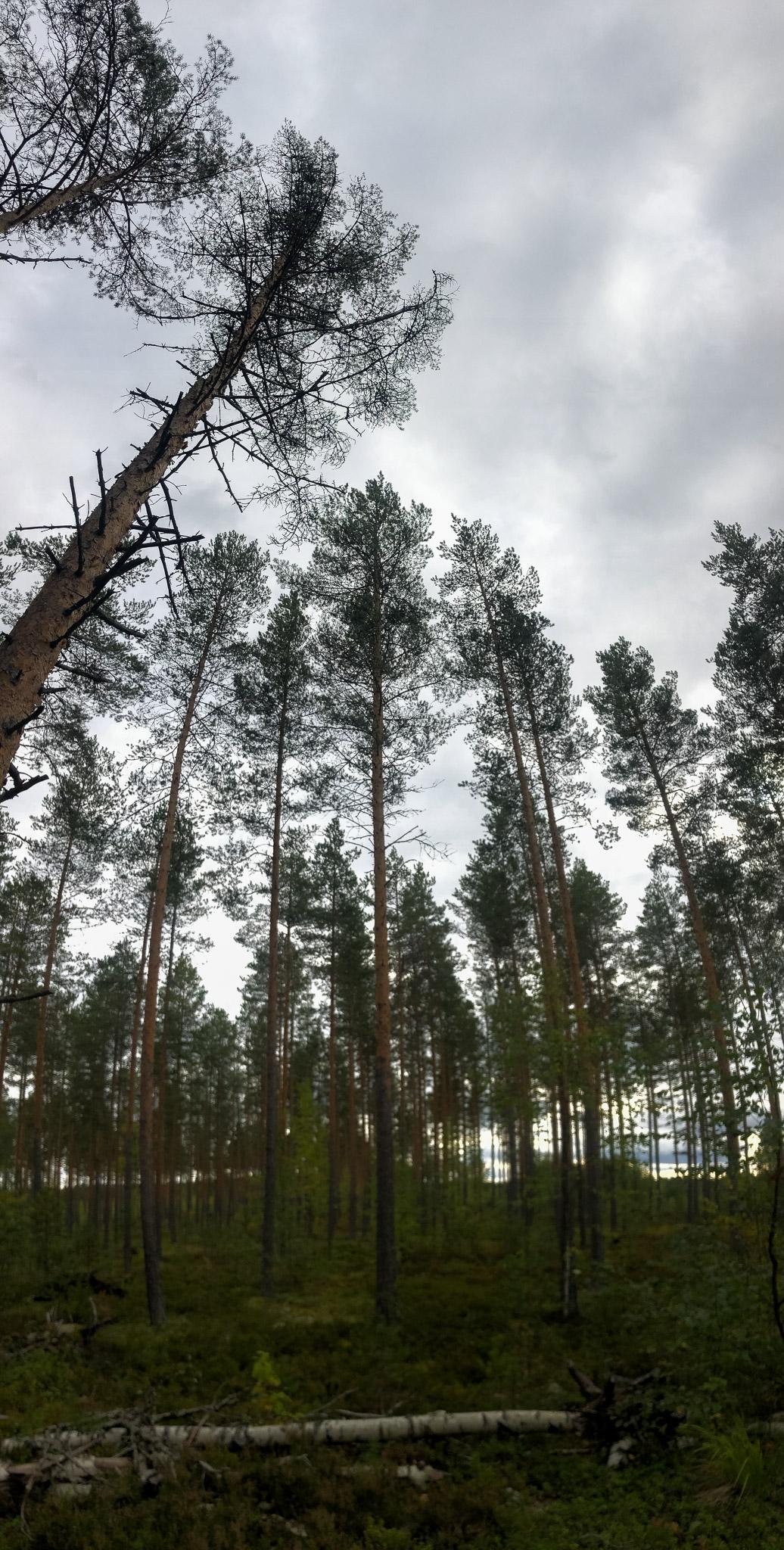 Hohe Bäume