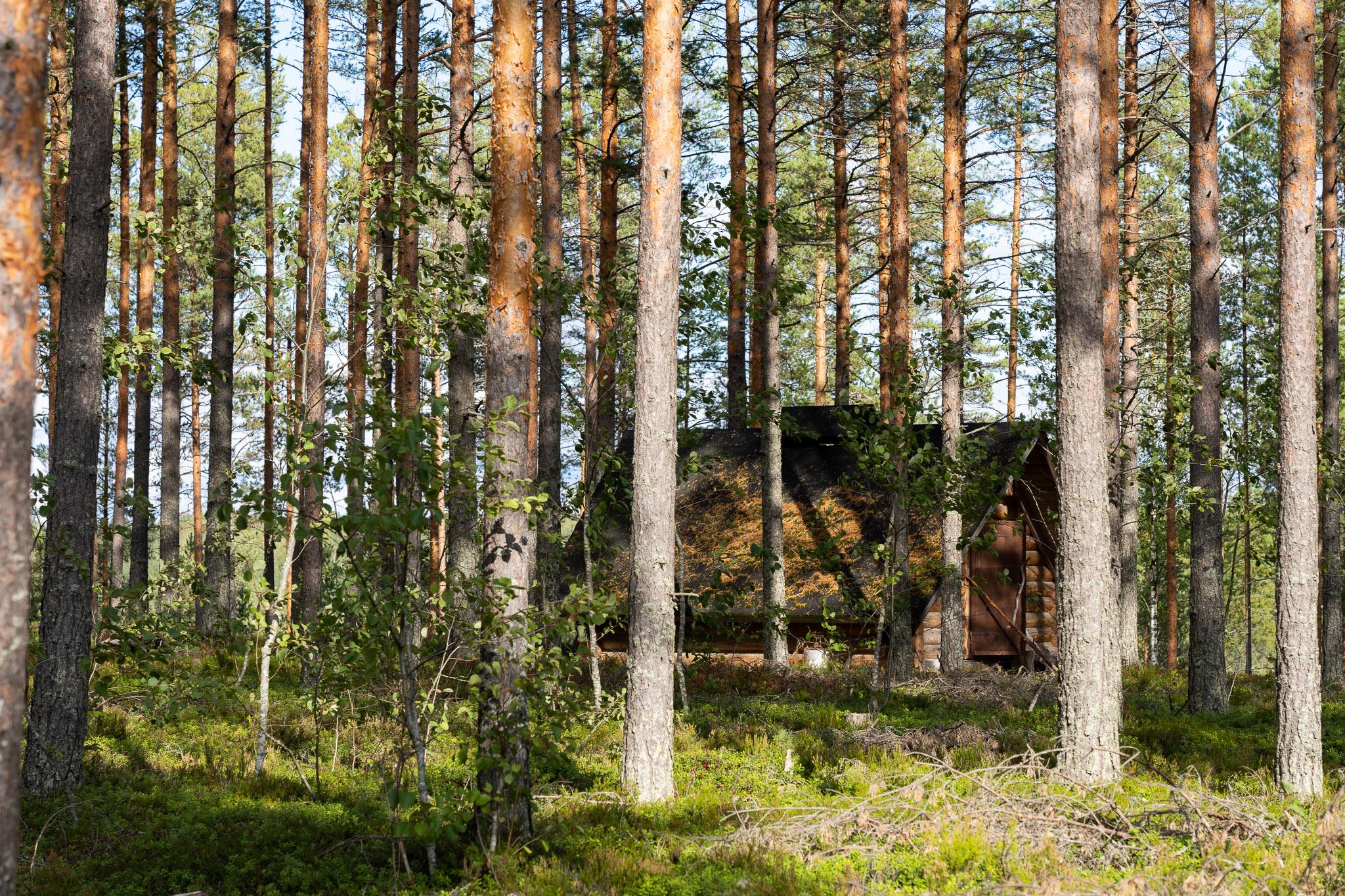 Häuschen mit Feuerstelle im Wald