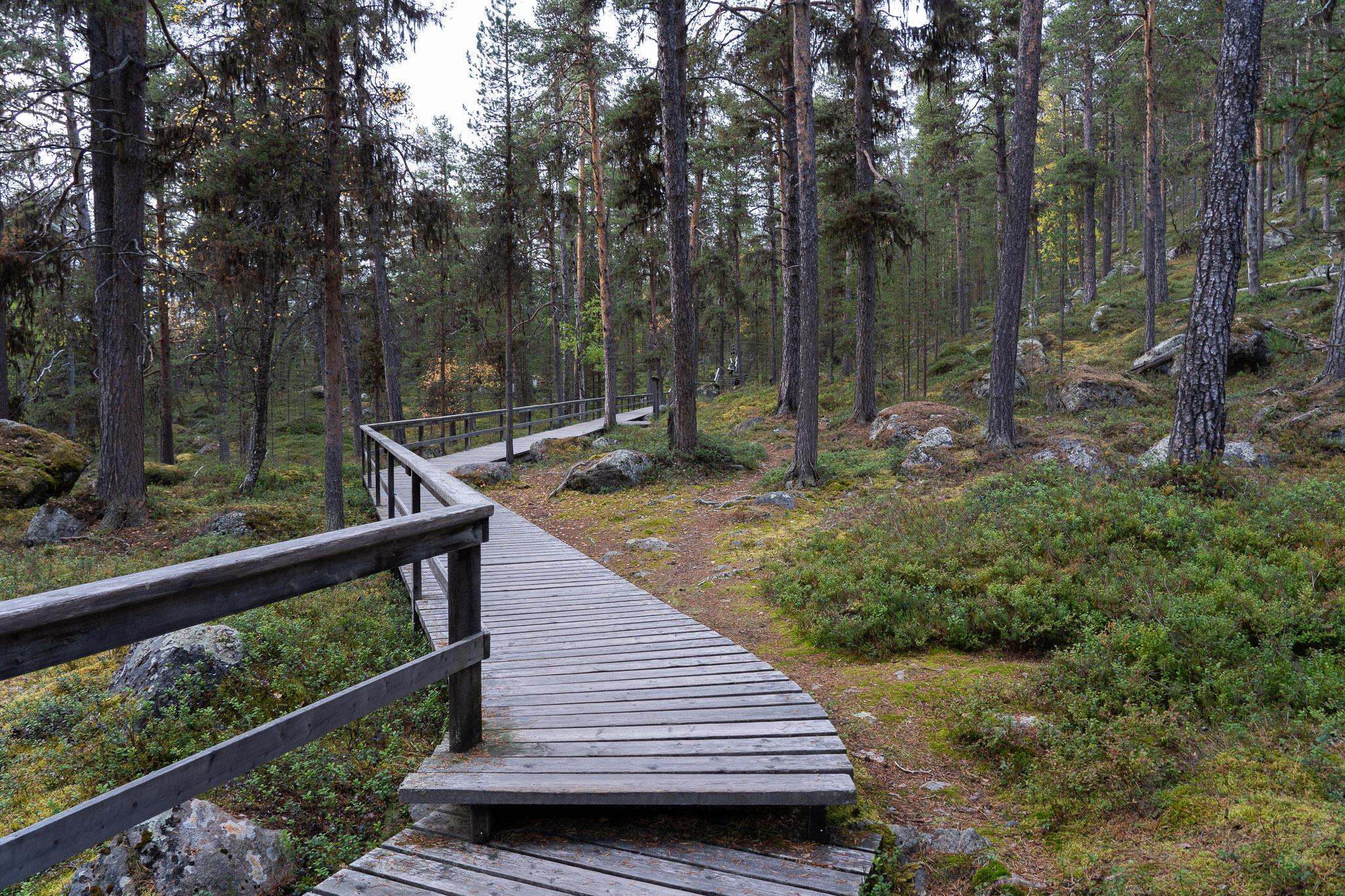 Bärenpfad durch den Wald