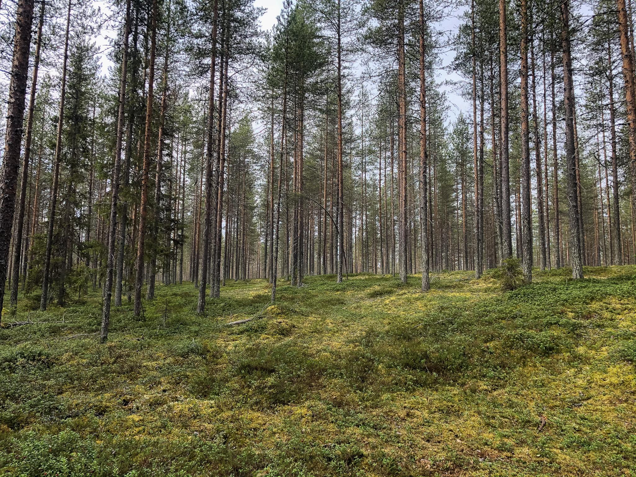 Waldspaziergang bei erster Rast