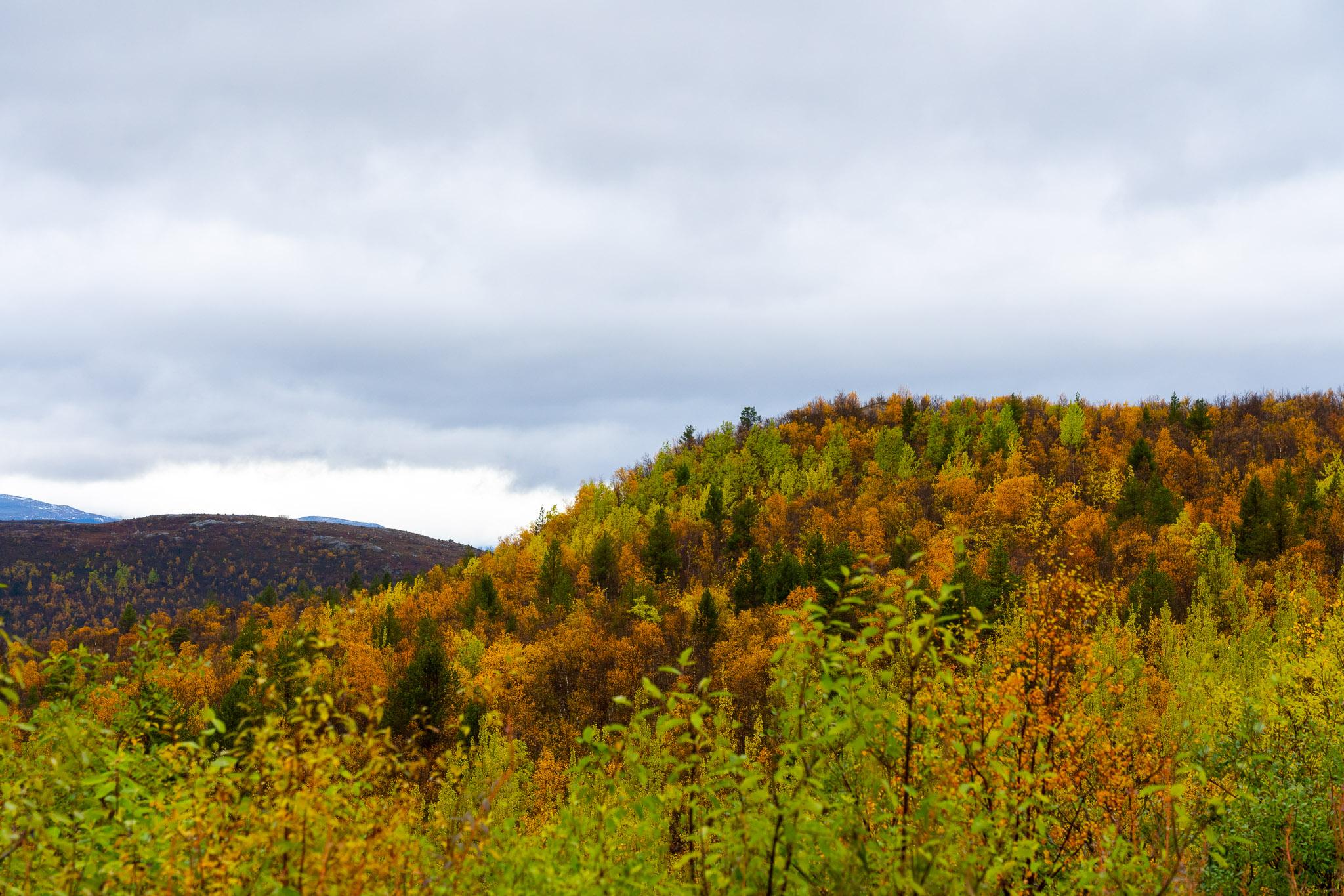 Farbige Wälder so weit das Auge reicht