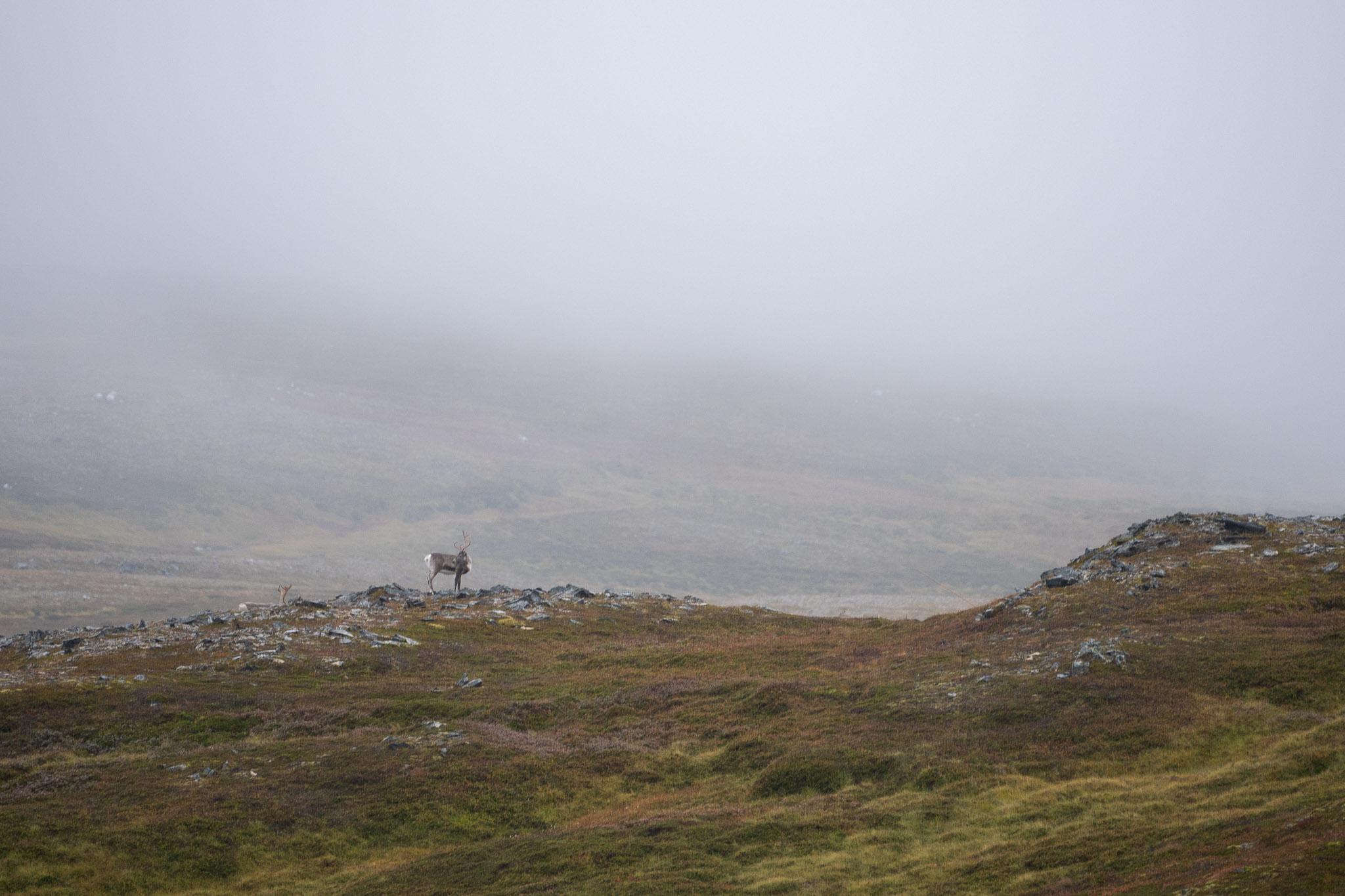 Rudolf im Nebel