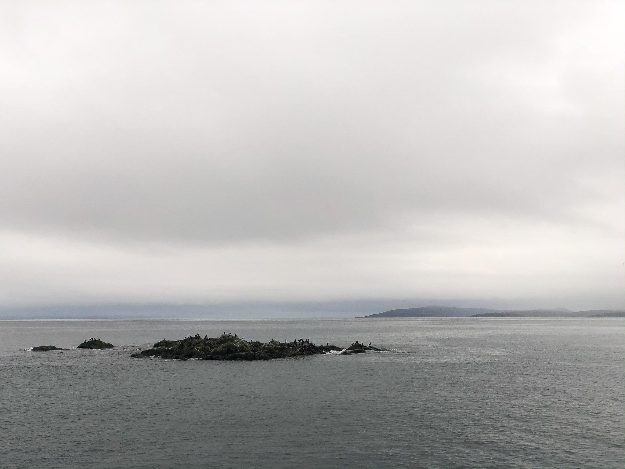 Vögel vor der Küste von Honningsvåg