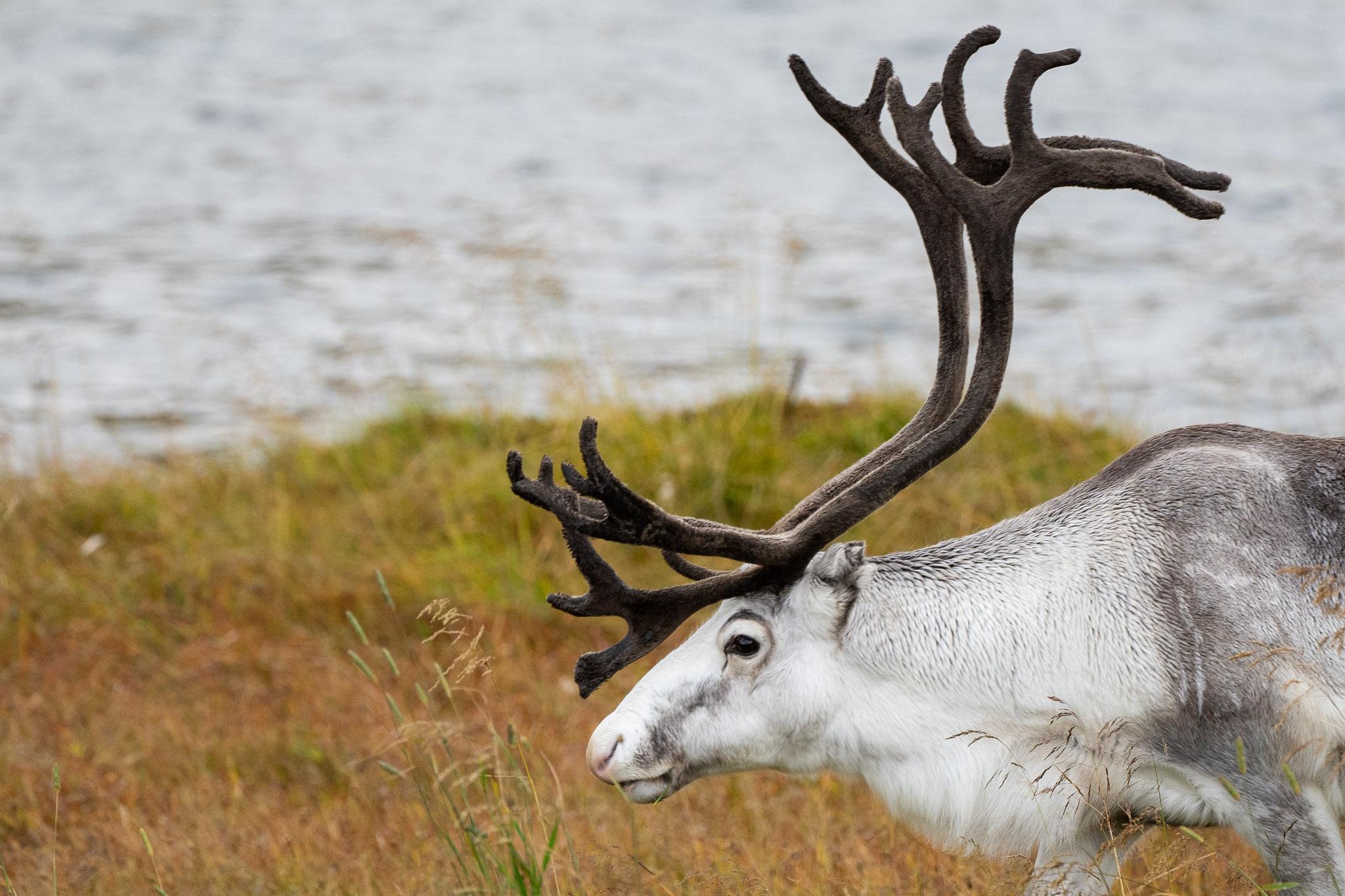 Rudolf im Vorgarten