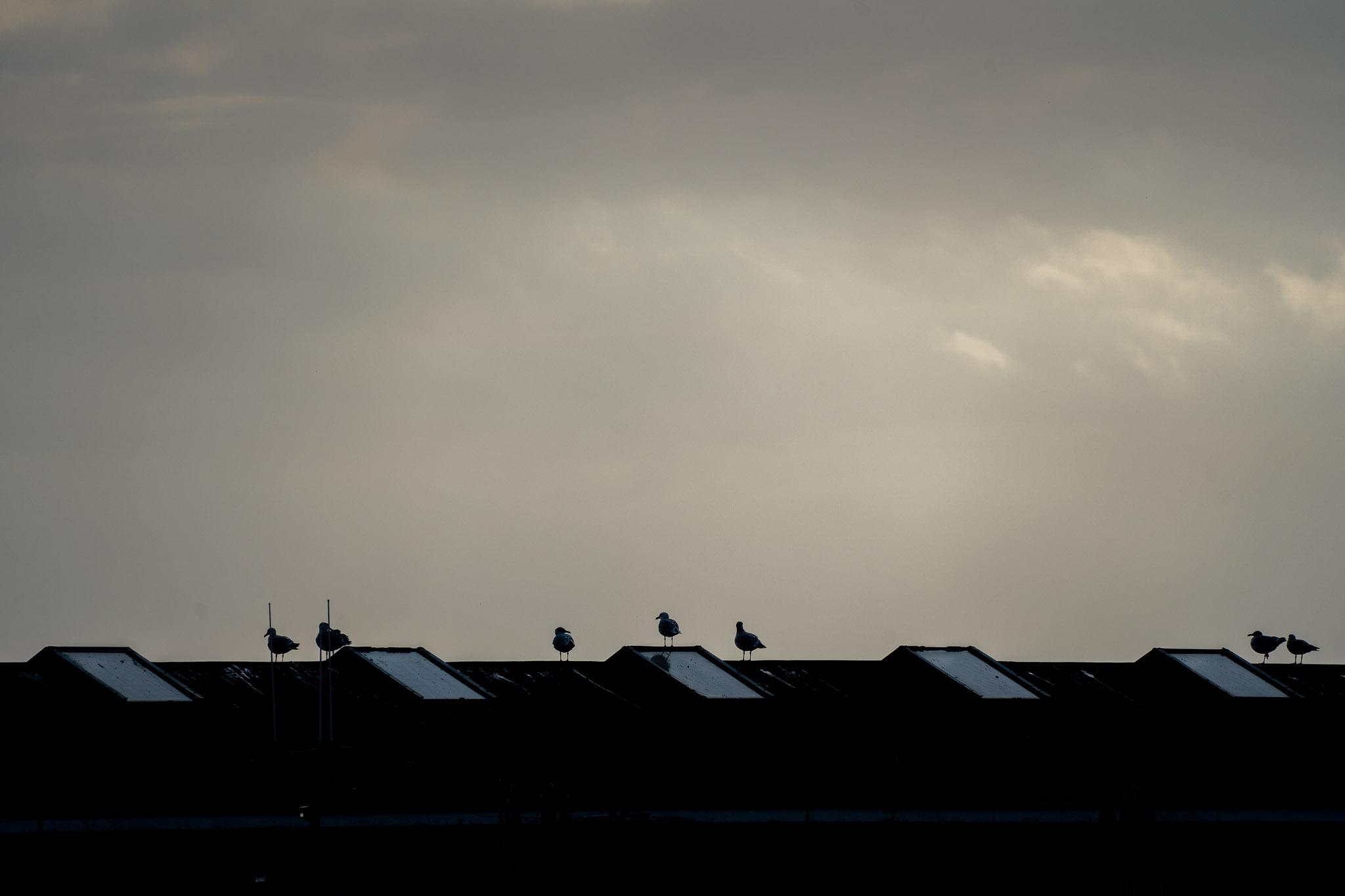 Dächer im Hafen